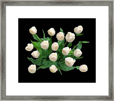 Rainy Day Tulips Framed Print by Diana Angstadt