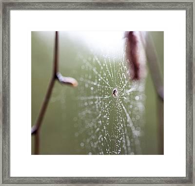 Rainy Day Web Framed Print
