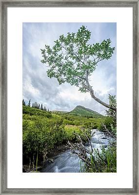 Rainy Evening On A Mountain Stream Framed Print