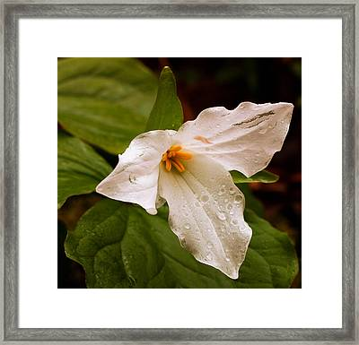 Framed Print featuring the photograph Rainy Trillium by Haren Images- Kriss Haren