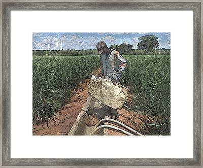 Raising Cane Framed Print