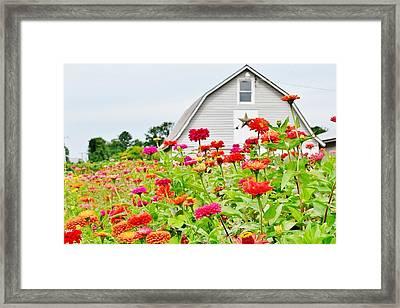 Raising Zinnia Flowers - Delaware Framed Print