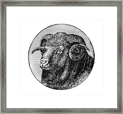 Ram, 19th Century Framed Print by Granger