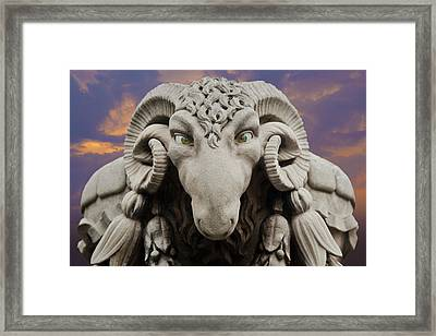 Ram-a-sees Framed Print by David Davies