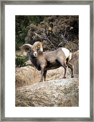 Framed Print featuring the photograph Ram Bluff by Kevin Munro