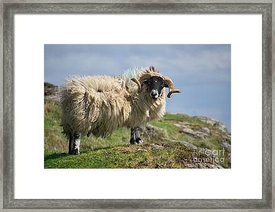 Framed Print featuring the photograph Ram by Juergen Klust