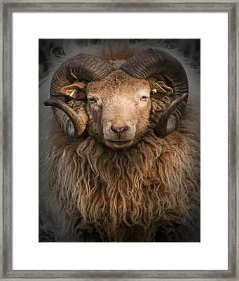 Ram Portrait Framed Print