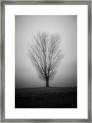 Ramblin' Tree Framed Print