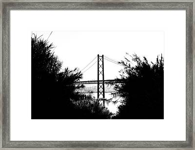 Rambling Through The Undergrowth Framed Print by Marco Oliveira