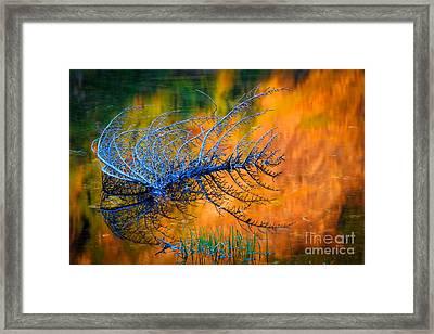 Rampart Lakes Skeleton Framed Print by Inge Johnsson