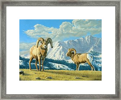 Rams On The Ridge  Framed Print