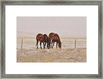 Ranch Horses In Snow Framed Print by Kae Cheatham