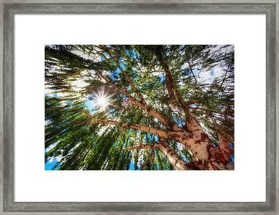 Random Tree Downtown Leavenworth Washington Framed Print by Rscpics