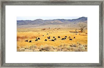 Range Cattle Framed Print by Marilyn Diaz