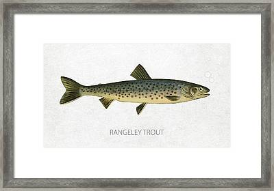 Rangeley Trout Framed Print by Aged Pixel