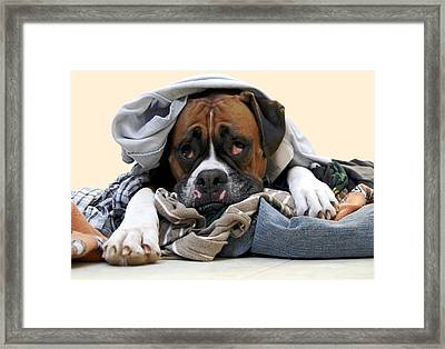 Ranger Danger Fresh Framed Print by Stephanie McDowell