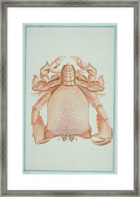 Ranina Ranina Framed Print