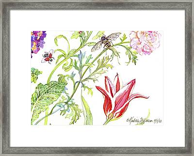 Ranuncula And Tulip Framed Print