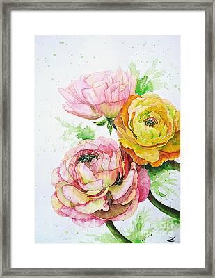 Ranunculus Flowers Framed Print by Zaira Dzhaubaeva