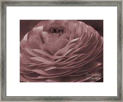 Framed Print featuring the photograph Ranunculus Red by Jean OKeeffe Macro Abundance Art