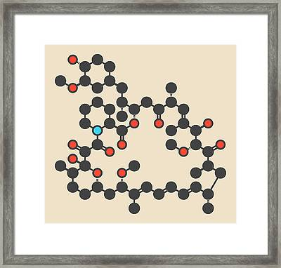 Rapamycin Or Sirolimus Drug Molecule Framed Print by Molekuul