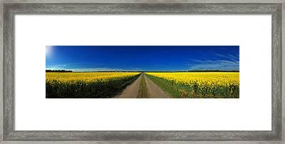 Rape Field Framed Print by Frank  Herrmann