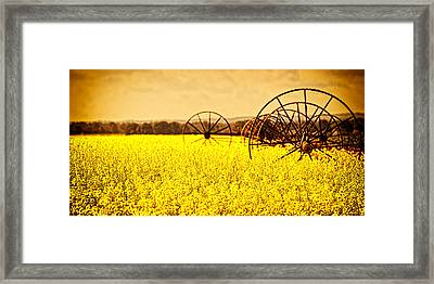 Rapeseed Farm In Bloom Framed Print by Vicki Jauron