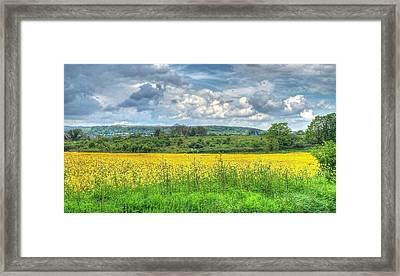 Rapeseed Field Framed Print by Paul Muscat