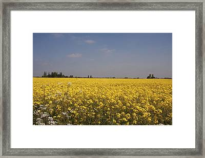 Framed Print featuring the photograph Rapeseed Field. by Paul Scoullar