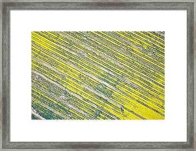 Rapeseed Field Framed Print by Tom Gowanlock