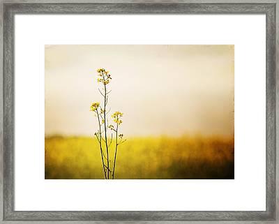 Rapeseed In Bloom Framed Print