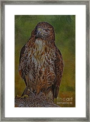 Raptor In Apopka Framed Print by Deborah Benoit