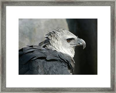 Raptor Profile Framed Print