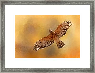 Raptor's Afternoon Flight Framed Print by Jai Johnson
