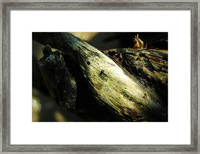 Rapture On The Lonely Shore Framed Print by Rebecca Sherman