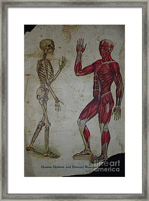 Rare Medical Illustration 1 Of 4 Framed Print by Paul Ward