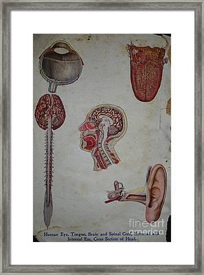Rare Medical Illustration 2 Of 4 Framed Print