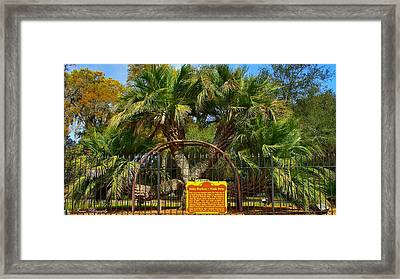 Rare Palm Tree Framed Print