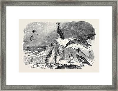 Rare Winter Birds Recently Shot In Yorkshire 1 Framed Print by English School