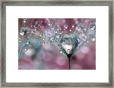 Rasberry Sparkles Framed Print