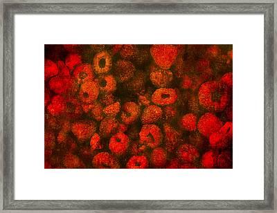 Raspberries Framed Print by Alexander Senin