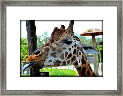 Framed Print featuring the photograph Raspberry Face by Amanda Vouglas