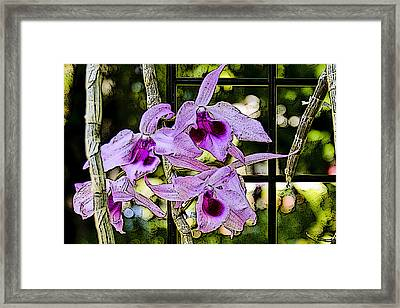 Raspberry Orchids Framed Print