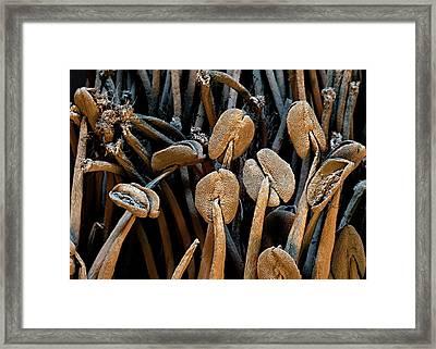 Raspberry Stamens Framed Print by Stefan Diller