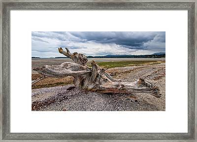 Rathtrevor Beach Stump Framed Print by James Wheeler