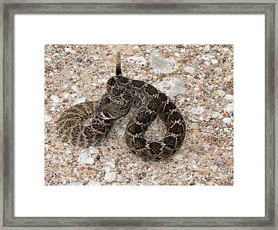 Framed Print featuring the photograph Rattler by Linda Cox