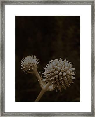 Rattles Framed Print by Tim Good