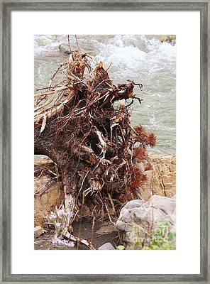 Framed Print featuring the photograph Ravaged Roots by Ann E Robson