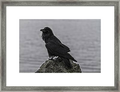 Raven 45813 Framed Print