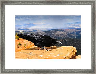 Raven Bryce Canyon Framed Print by Donald Fink